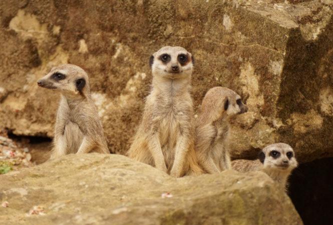 Der Zoo Dresden beherbergt viele verschiedene Tiere!