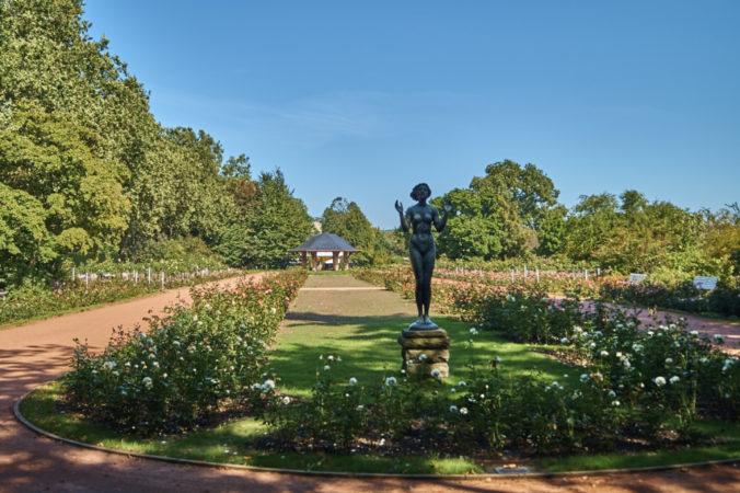 Wenn im Rosengarten alles blüht, ist er einer der schönsten Orte Dresdens!