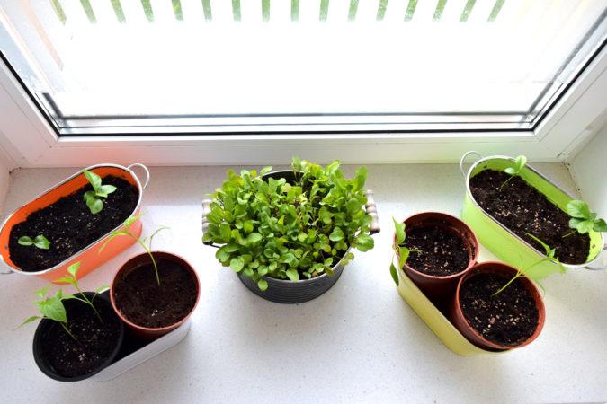 Fensterbänke, die Richtung Süden, Osten oder Westen zeigen, taugen hervorragend zur Anzucht von Pflanzen. | Bild: Franziska Topf