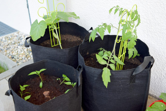 Tomaten, Zucchini und Chili gedeihen auf einer sonnigen Terrasse oder einem Balkon hervorragend.   Bild: Franziska Topf