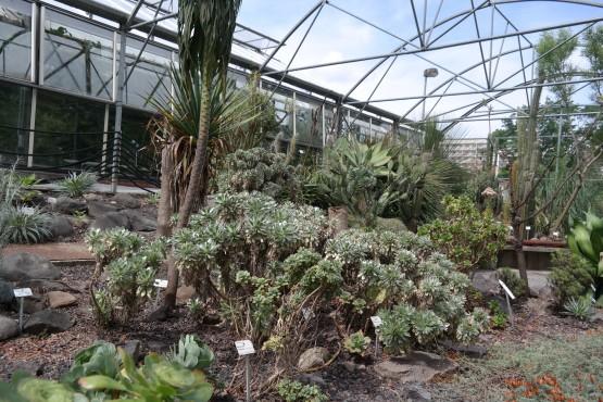 Sukkulenten im Botanischen Garten Dresden