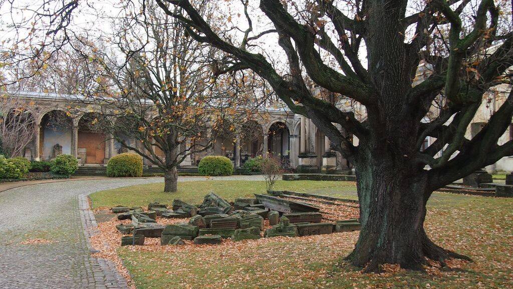 Bäume wie aus einem Märchen auf dem Neuen Annenfriedhof