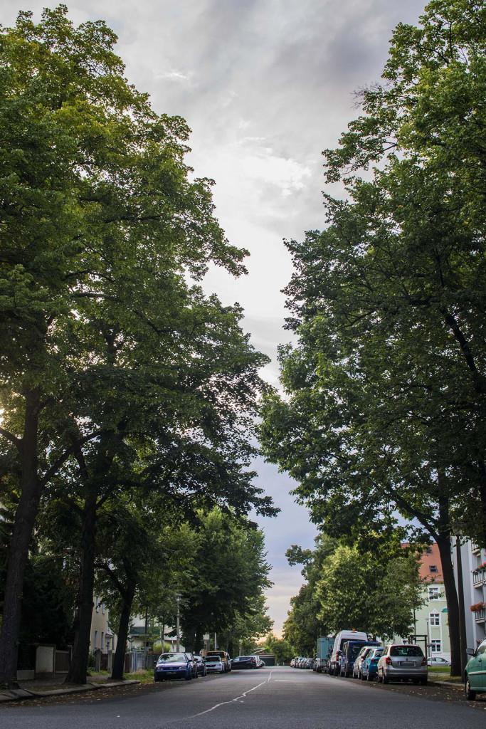 Die Kadenstraße liegt ruhig und von Bäumen gesäumt.