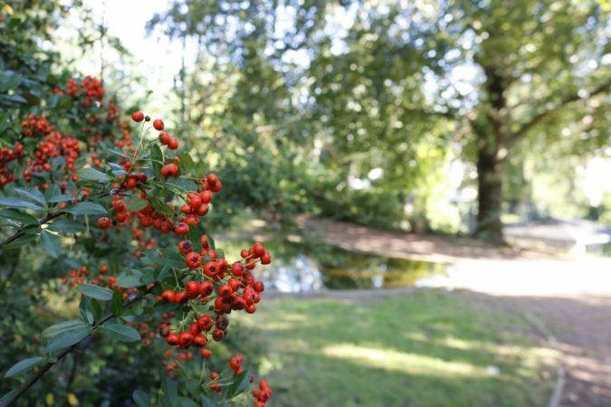 Der niedliche Garten liegt direkt gegenüber des Karl-May-Museums.