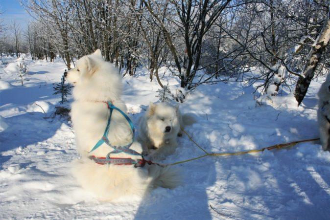 Auch die Vierbeiner betreiben gerne Wintersport.
