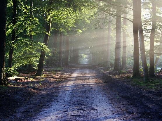 Marios Weg wird die ganze Welt erlaufen, um überall Bäume der Erinnung zu pflanzen. Das sind ca. 75 000 Kilometer. | Foto: pixabay/bertvthul