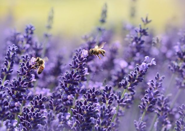 Die Bienen sind ein fleißiges Völkchen.